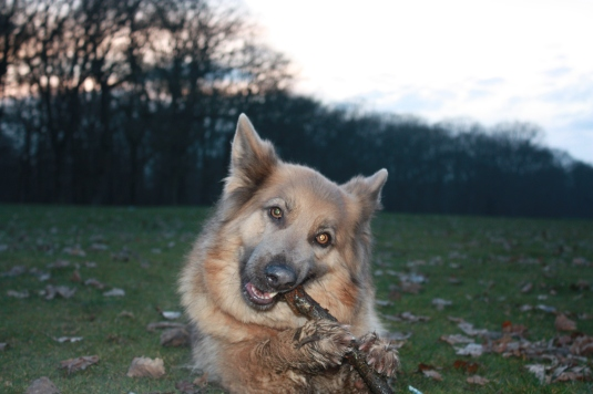 There's nothing quite like a good stick for chomping on...