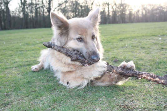 ... but today my stick is a flute!