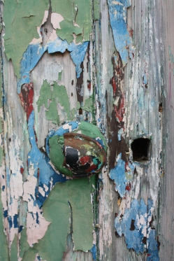 An old shed door & layers of peeling paint!